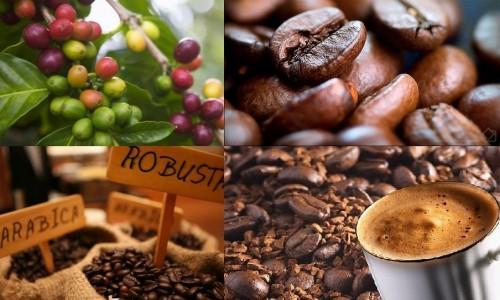 5 bước đơn giản để bắt đầu kinh doanh cà phê