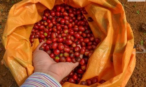 Cà phê Arabica Lâm Đồng ngon số Dzach!