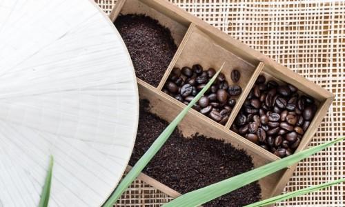 Vựa cà phê Robusta lớn nhất Việt Nam