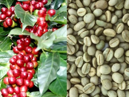 Giá cà phê phập phù trước đồn đoán có cơn bão tài chính