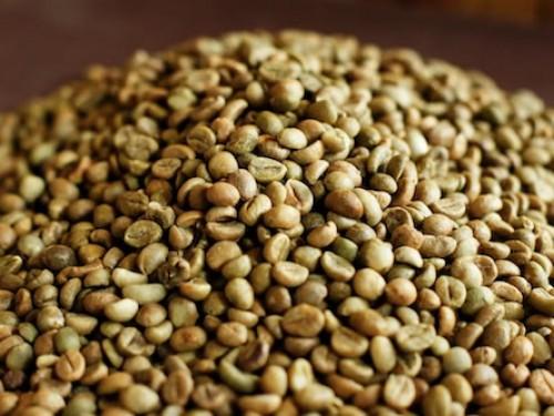 Giá cà phê sáng 17 tháng 09 năm 2015