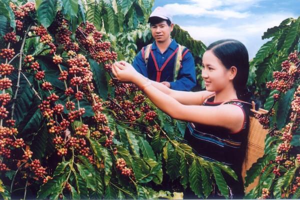 Các loại cà phê phổ biến ở Việt Nam
