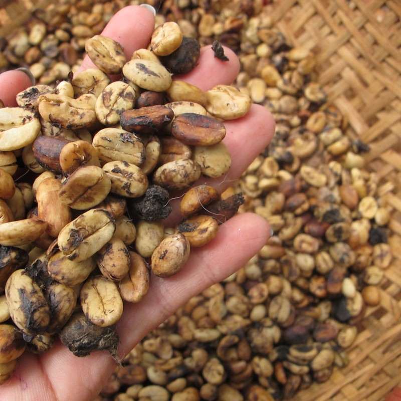 100% Vietnam civet coffee (Arabica)