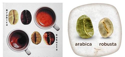 So sánh hạt Arabica với hạt Robusta